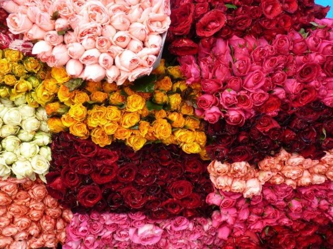 Roses au Mexique